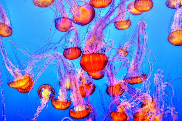 The UK's Best Aquariums
