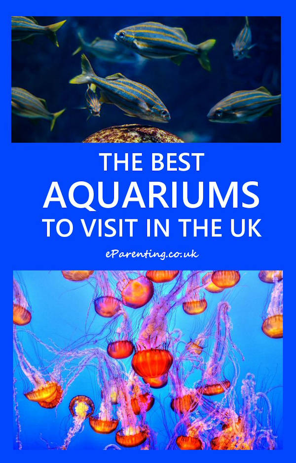 The Best Aquariums To Visit in the UK