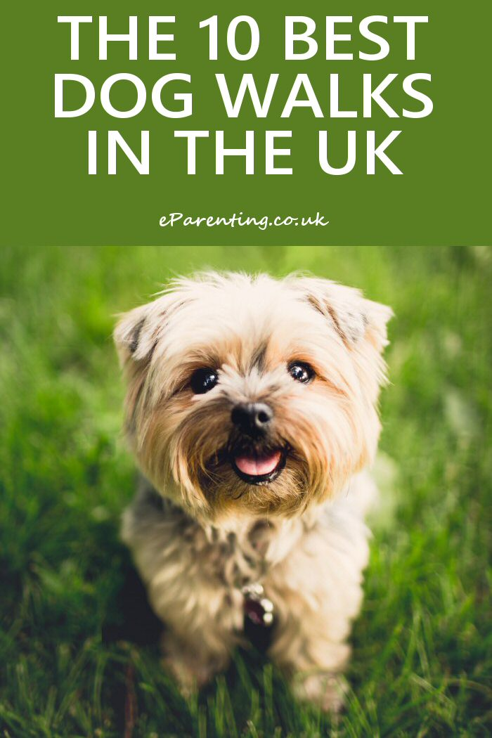 Top 10 Dog Walks In Britain