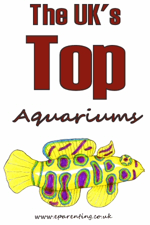The Best Aquariums in the UK.